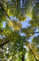 Importateur de Bois lamellé collé de construction issu de Forêts PEFC - Agence Boinet France