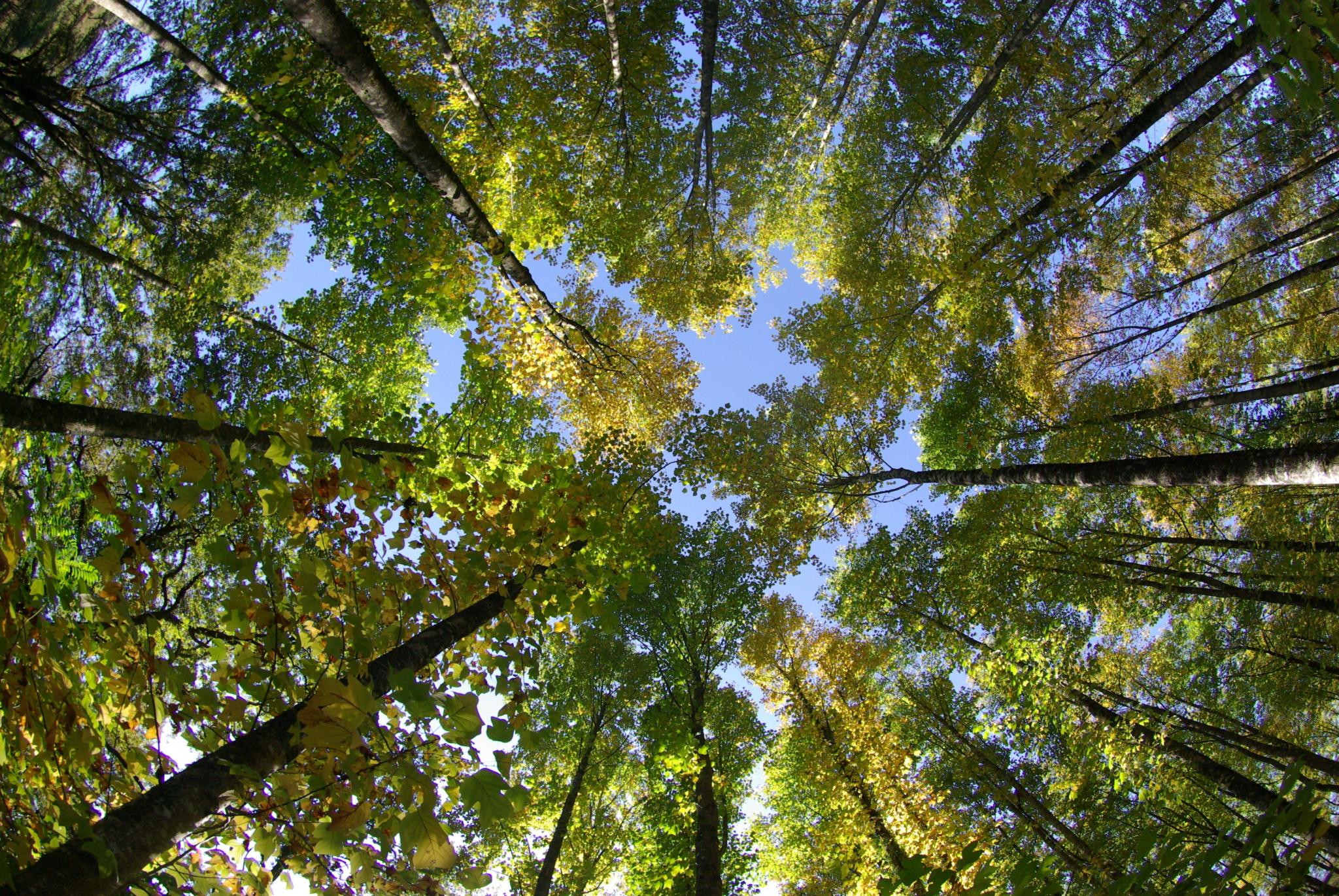 Agence Boinet - Importateur de Bois France