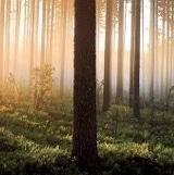Forêt bois du nord